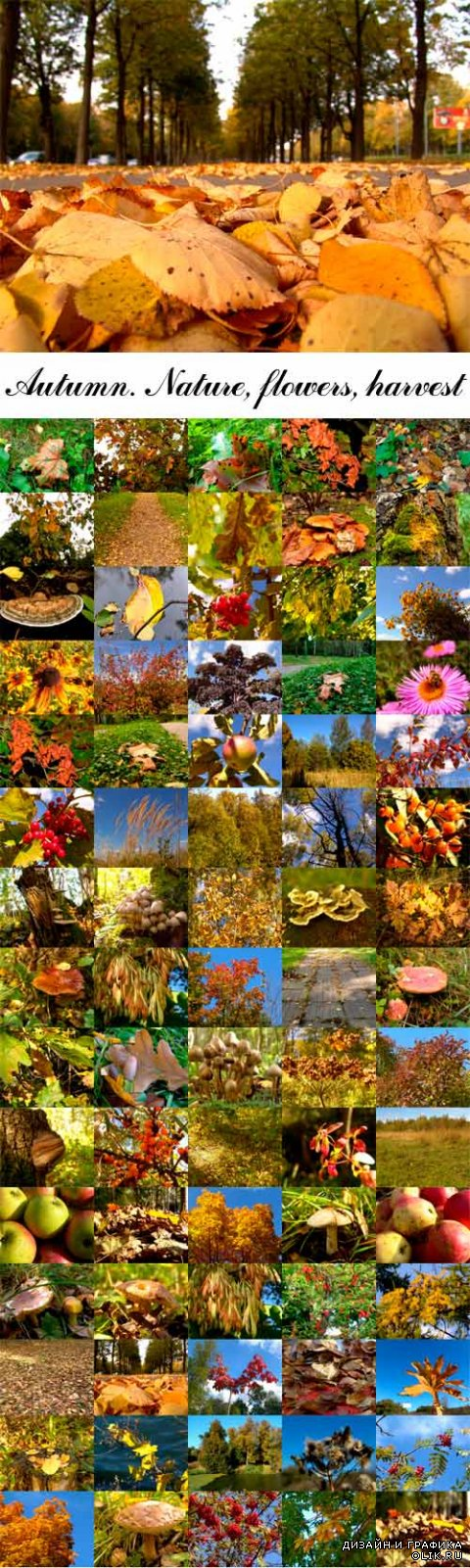 Autumn. Nature, flowers, harvest
