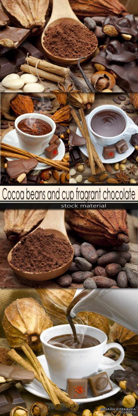 Cocoa beans and cup fragrant chocolate