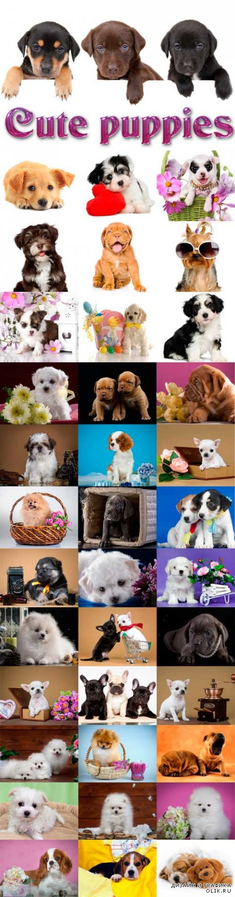 Cute puppies Raster Graphics