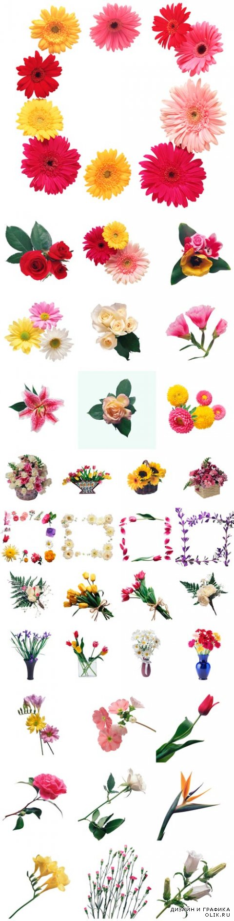 Different flowers on a white background