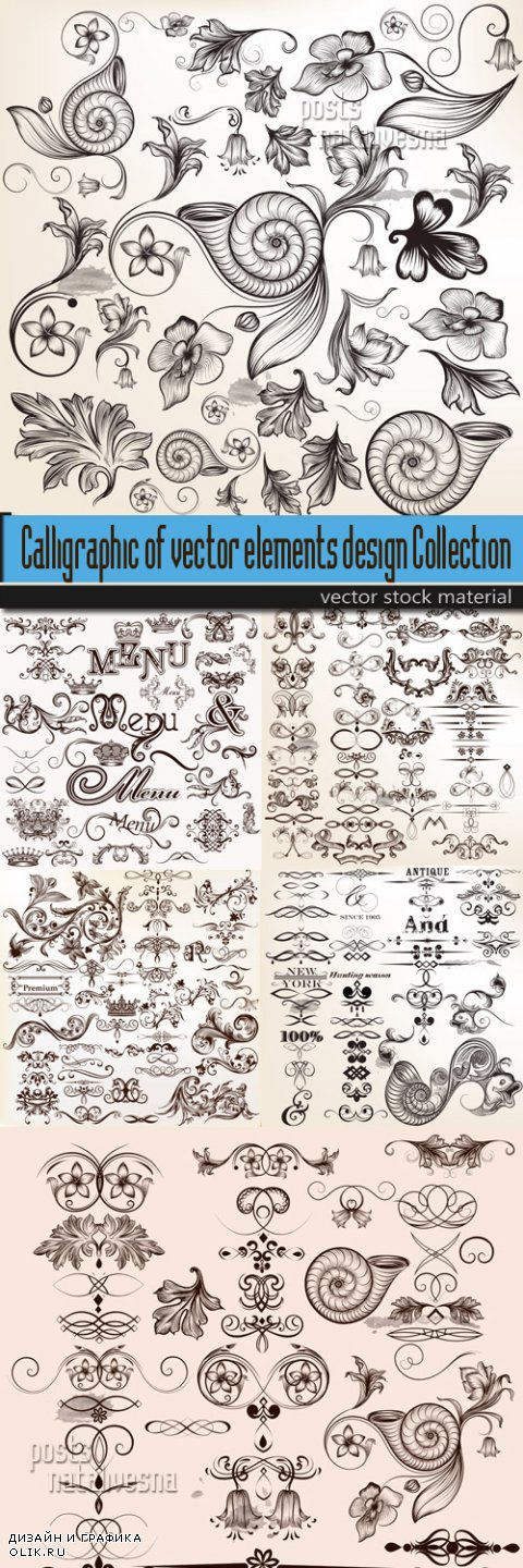 Calligraphic of vector elements design Collection