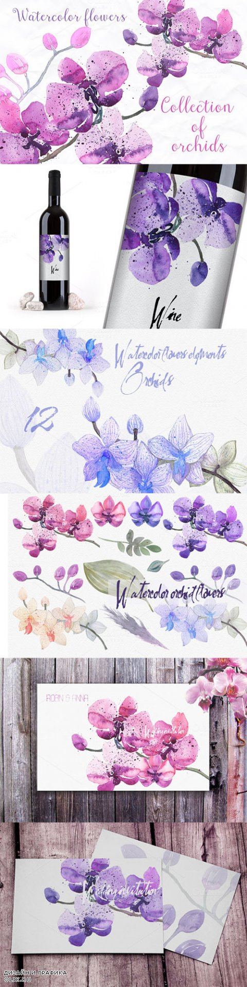 12 watercolor orchid - Creativemarket 231944