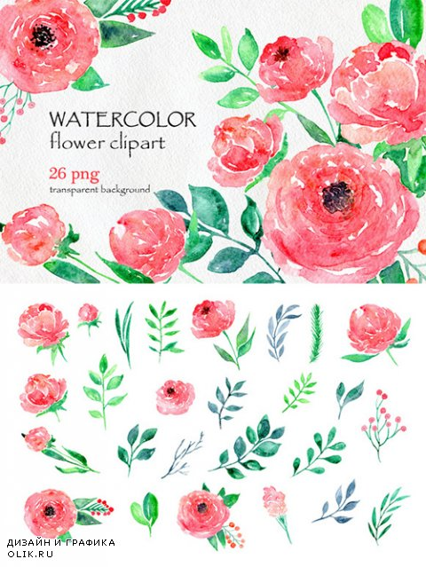 Watercolor flower peony, 26 in set - Creativemarket 557047