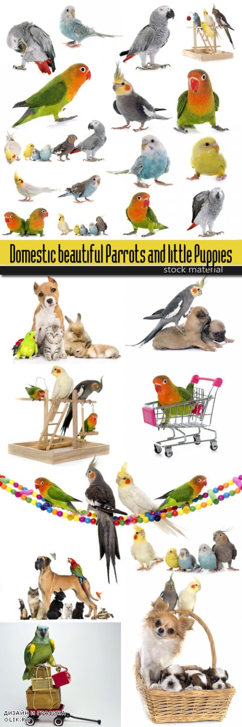 Domestic beautiful Parrots and little Puppies