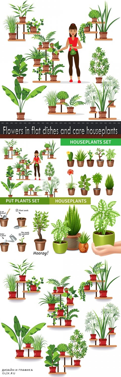 Flowers in flat dishes and care houseplants