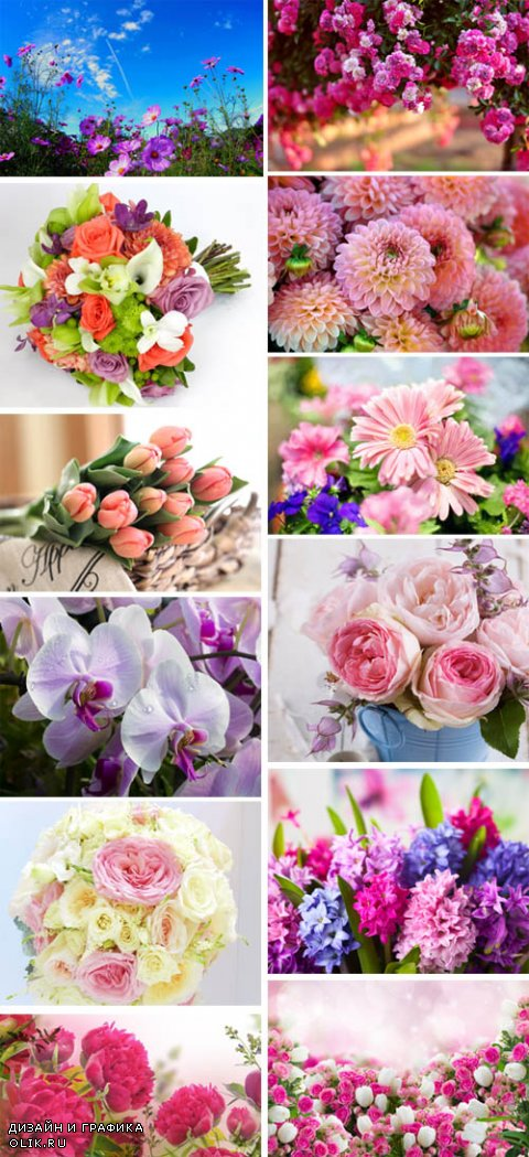 Beautiful Flowers Collection p.2