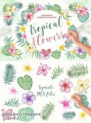 Watercolor tropical collection - 718431