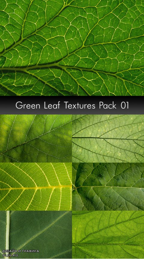 Green Leaf Textures, pack 1