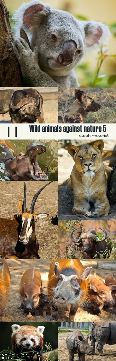 Wild animals against nature 5