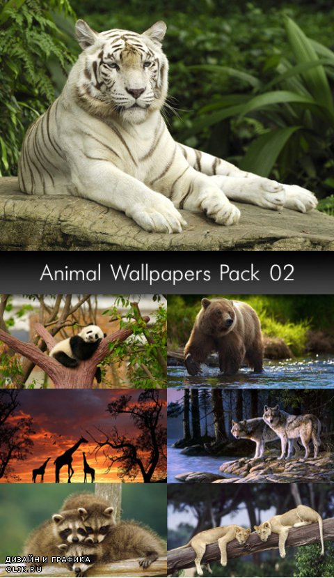 Animal Wallpapers, pack 2