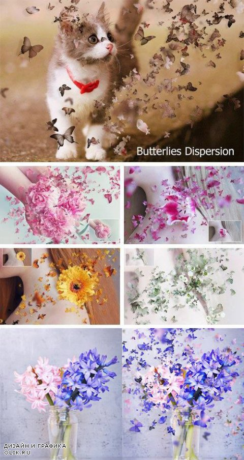 Butterflies Dispersion - 846389