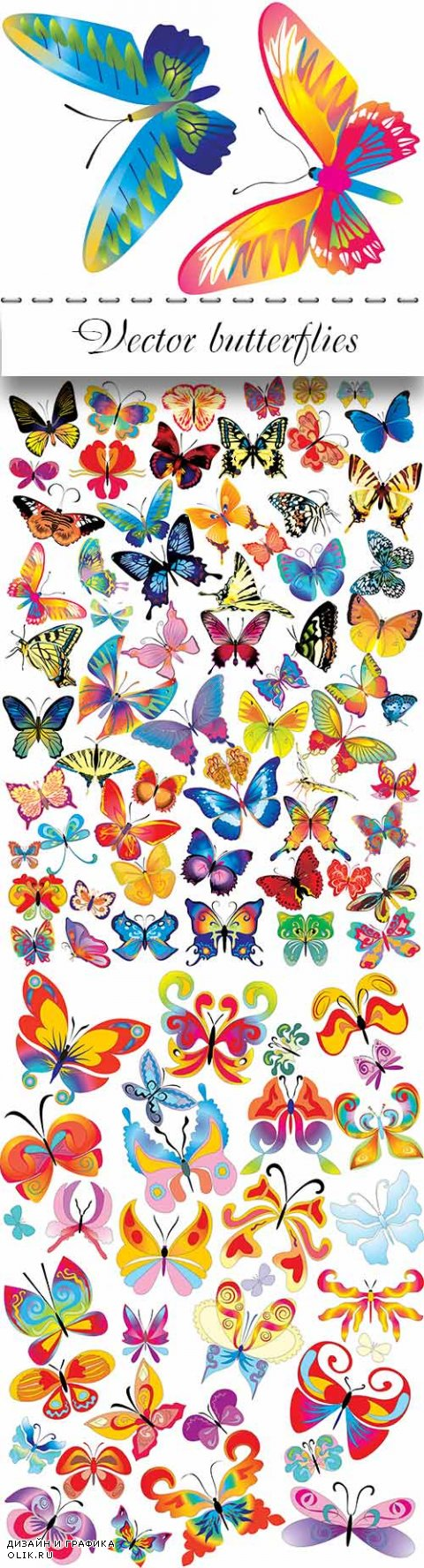 Vector butterflies for design