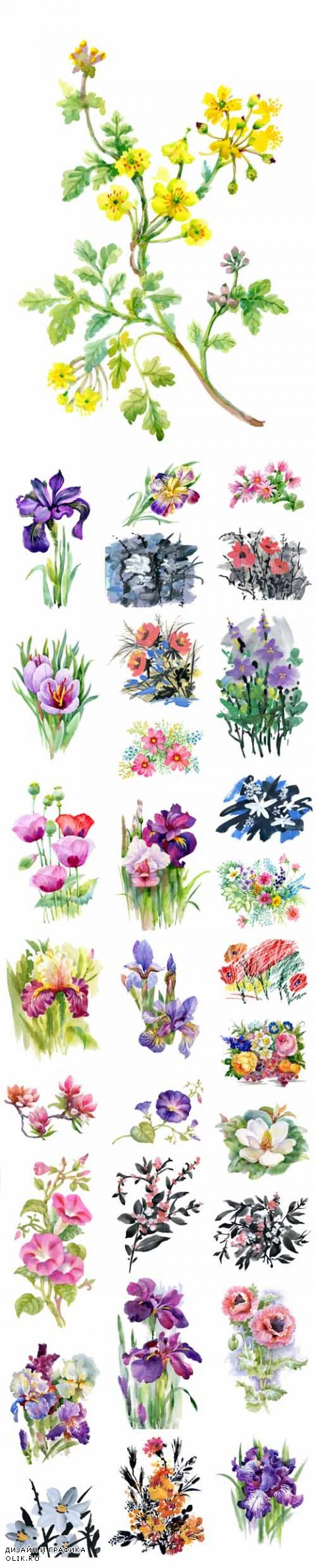 Vector Watercolor Summer Garden Blooming Flowers