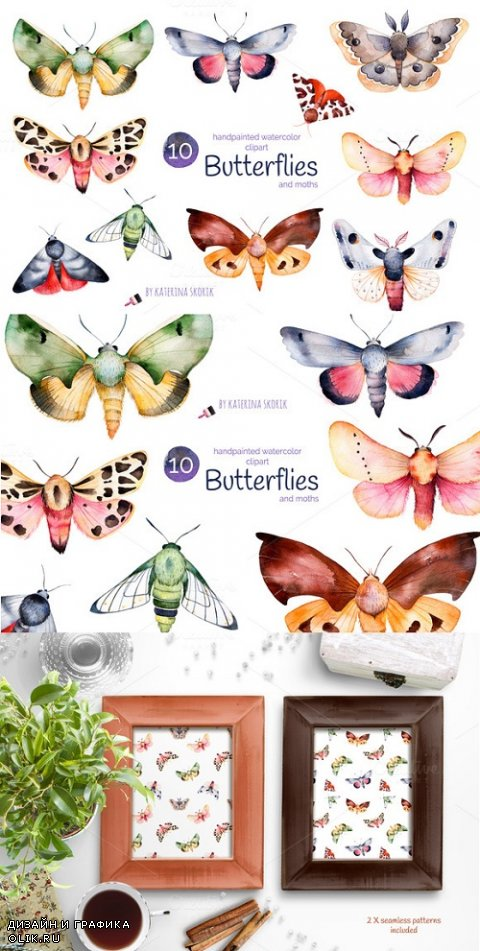 Butterflies and moths - 863983