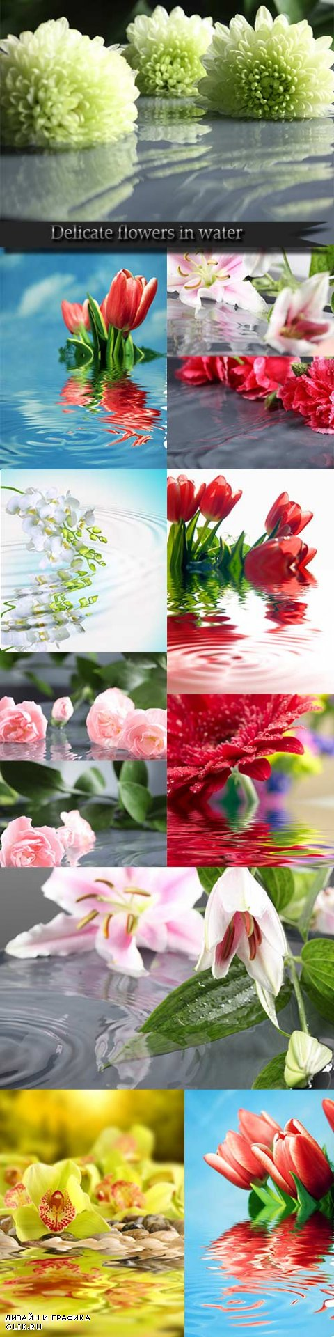 Delicate flowers in water