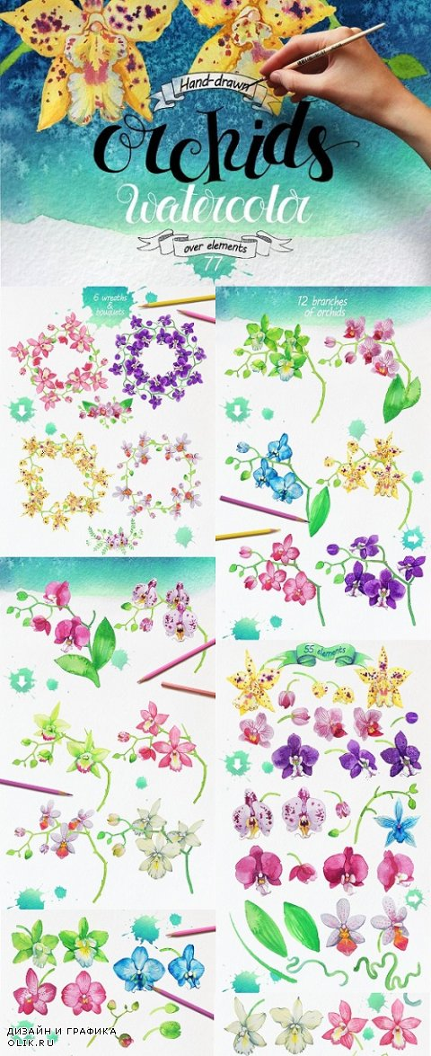 Bundle Watercolor Orchids - 696552