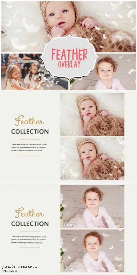 Feather Photo Overlays Overlay 566767