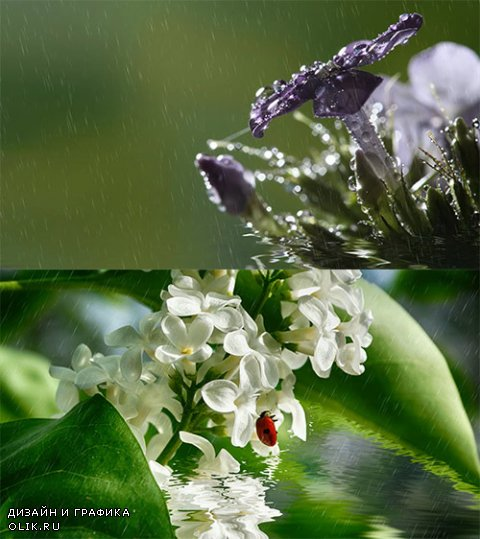 Beautiful delicate flowers in water in the rain