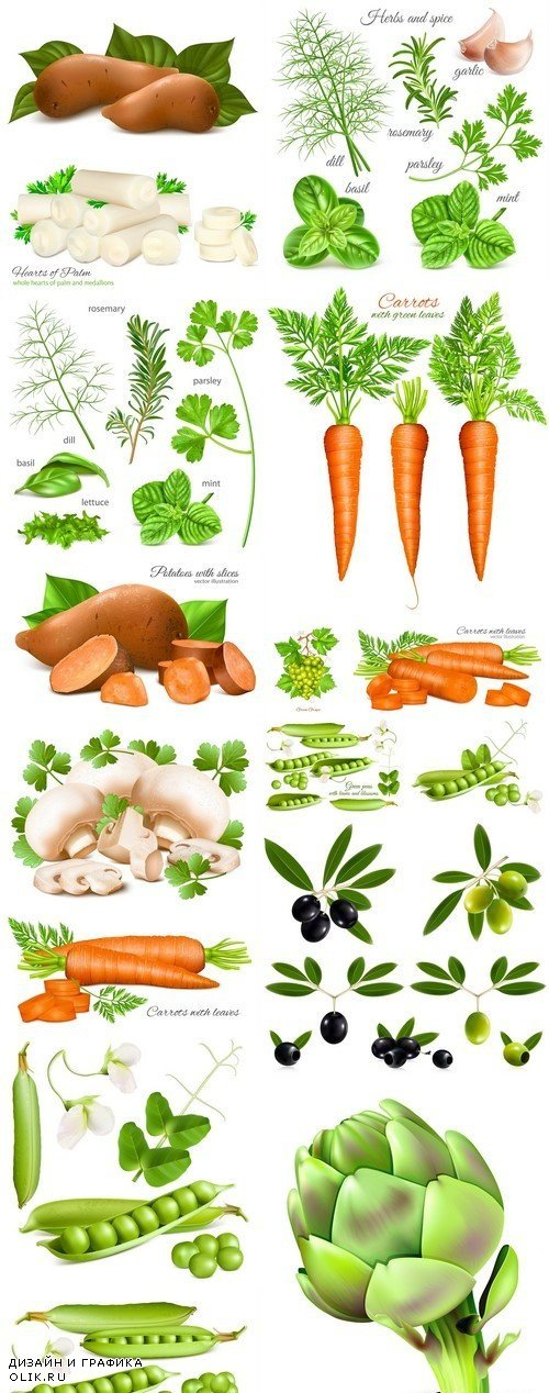 Herbs, spice and vegetables 16X EPS