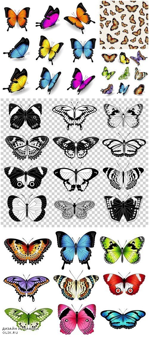 Vector color butterfly illustrations 5X EPS
