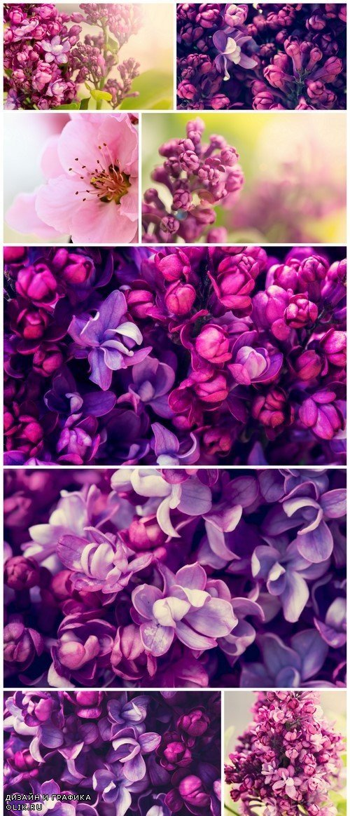Lilac flowers, spring background 9X JPEG