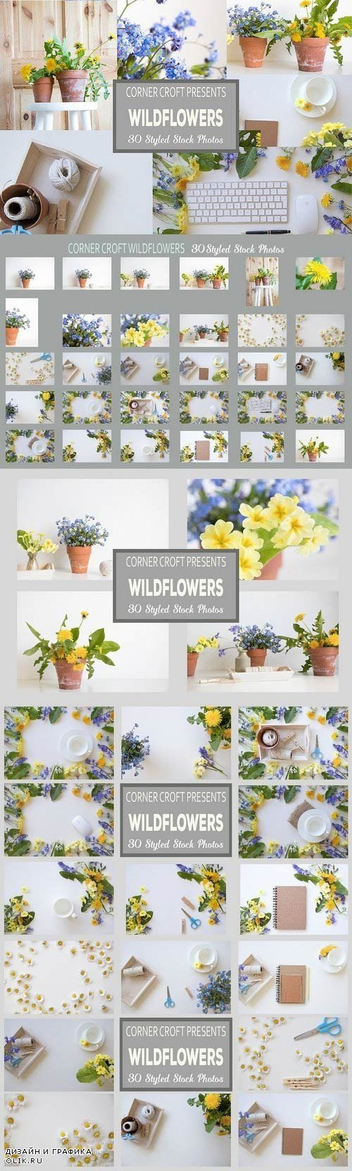 Wildflower Styled Stock Photo Bundle 1478836