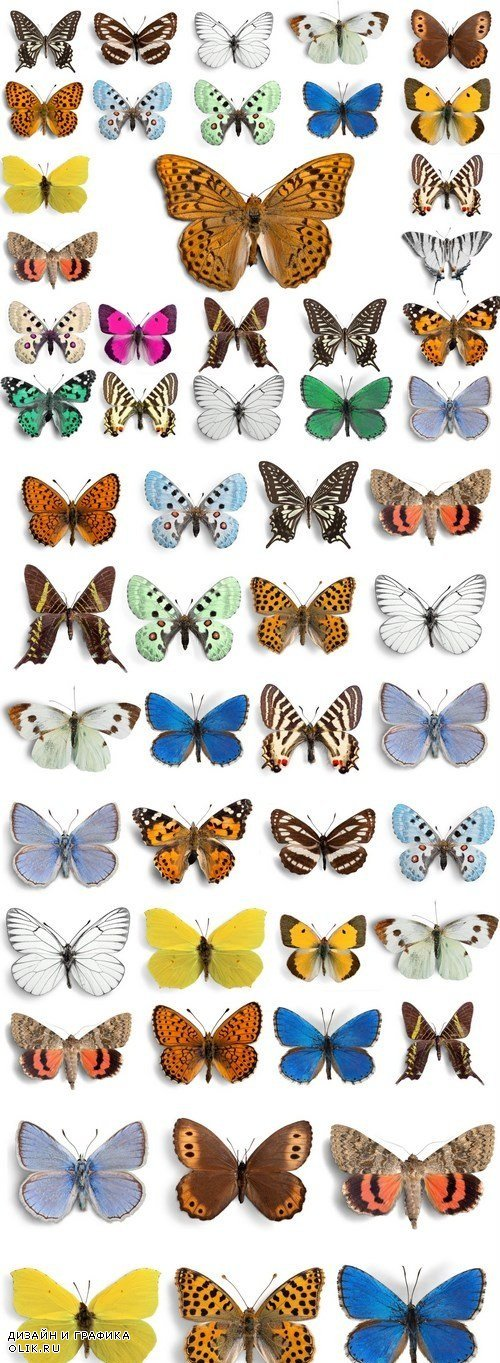 Beautiful Butterflies - 4xUHQ JPEG Photo Stock