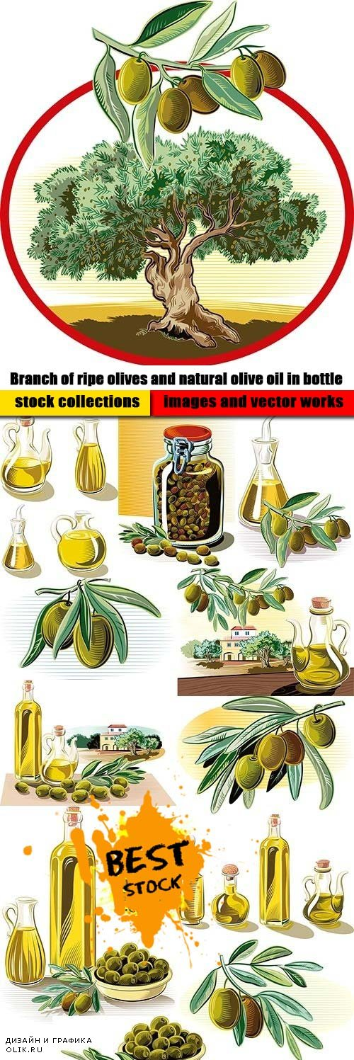 Branch of ripe olives and natural olive oil in bottle