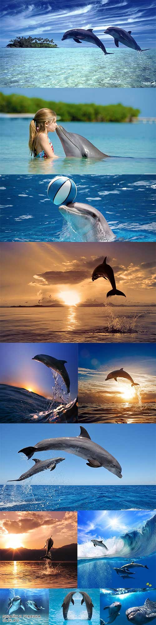 Graceful dolphins in the sea