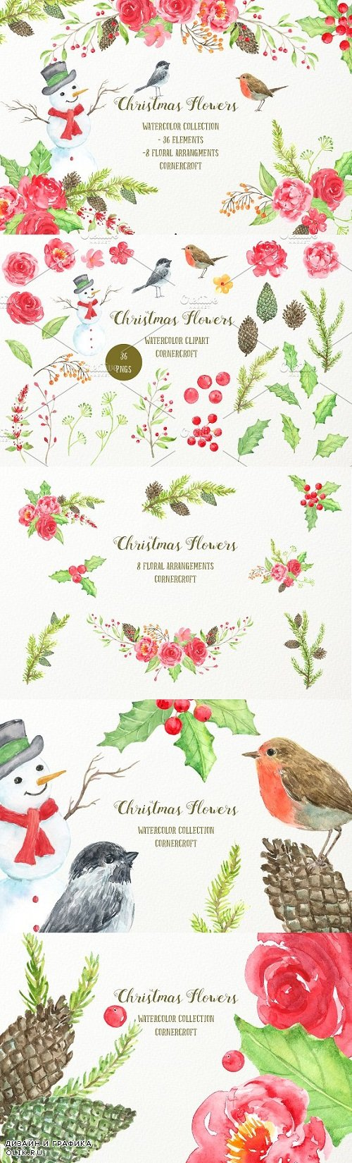 Watercolor Christmas Flowers - 2011791