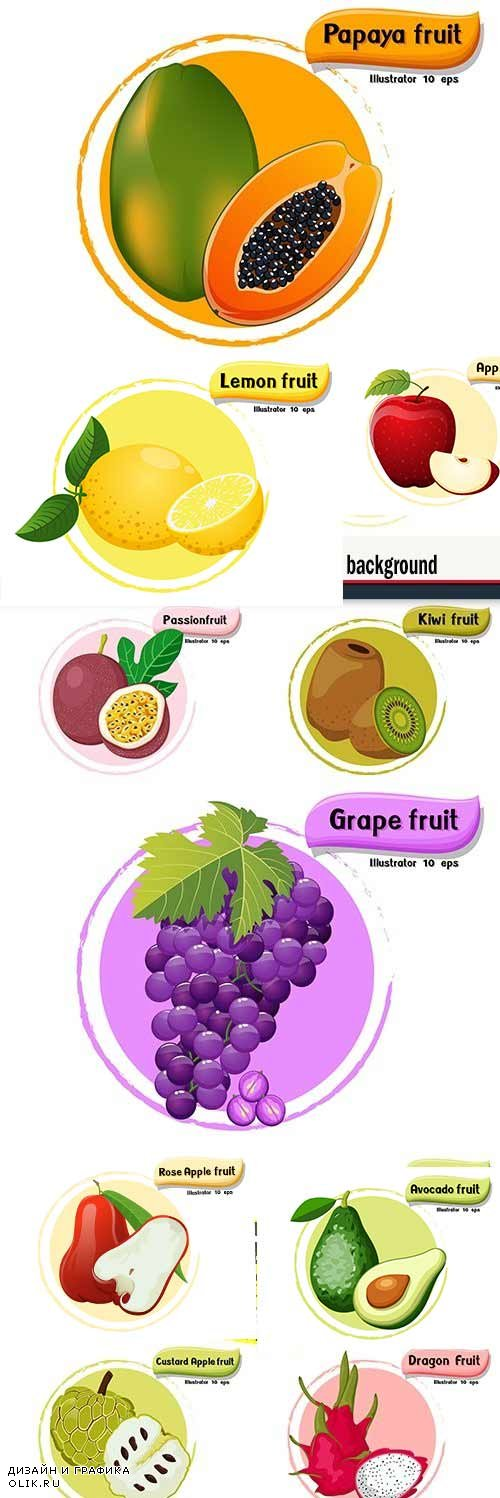 Vector fruit isolated on color design background