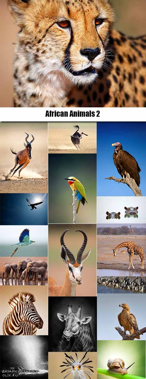 African Animals Stock Images #2 - 25 HQ Jpg
