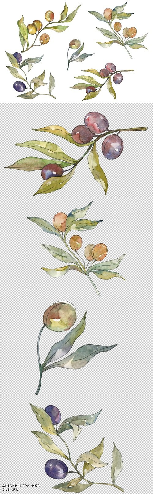 Olives Watercolor png - 3584162