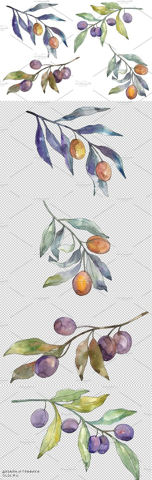 Olives 3 Watercolor png - 3584505