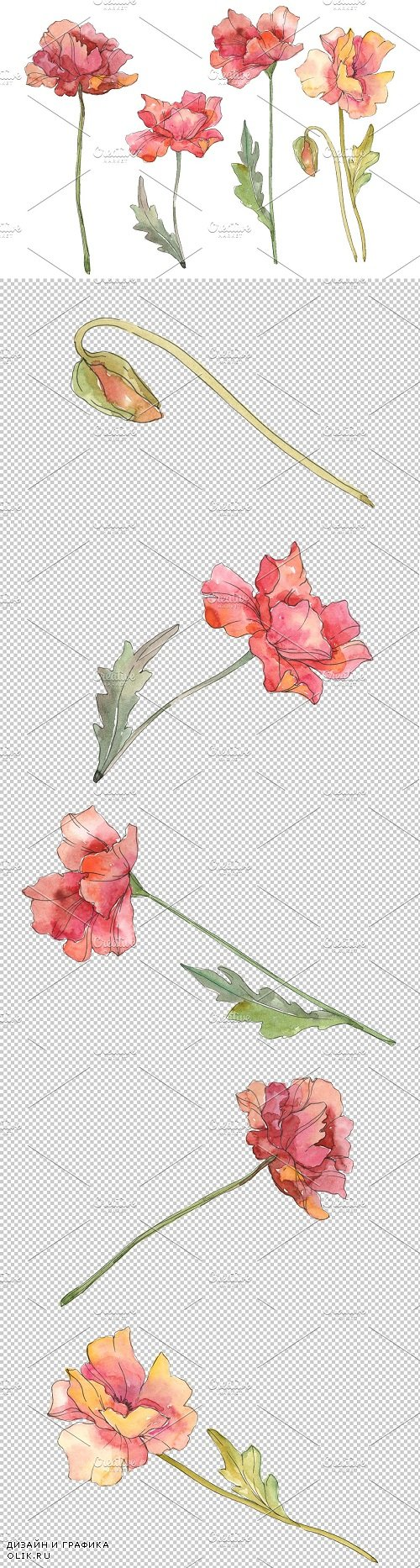Poppy red Watercolor png - 3585315