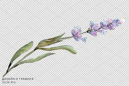 Bouquet of idyll lavender Watercolor - 3676026