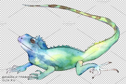 Iguana-2 Watercolor png - 3691366