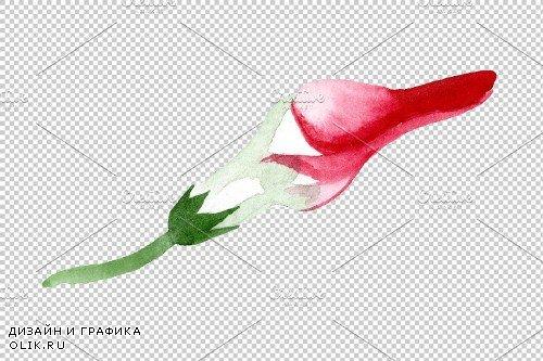 Strophanthus Watercolor png - 3697765