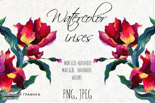 Watercolor iris flowers - 1875477