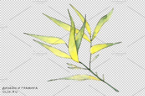 Bamboo watercolor product png - 3694977