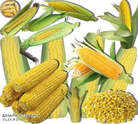 Png клипарты для фоторамки - Сладкая кукуруза