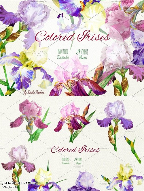 Colored Irises - 799268