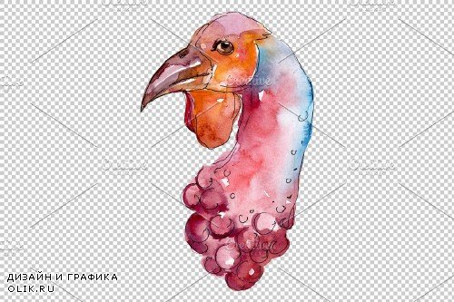 Farm animals: turkey head Watercolor - 3734658