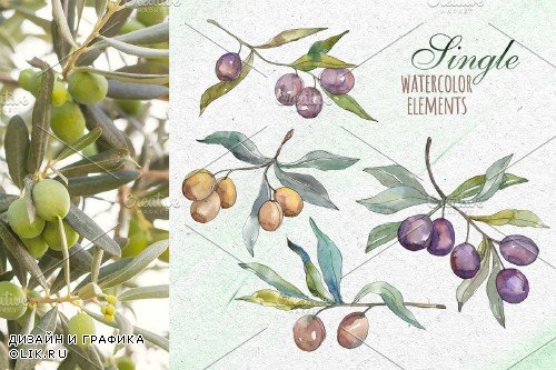 Tuscan Olives green Watercolor png - 3740351