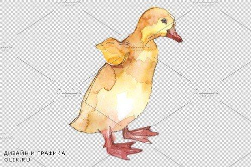 Farm animals: ducklings Watercolor - 3742420