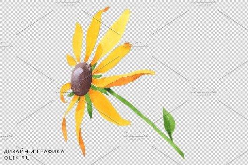 Black-eyed Susan/Rudbeckia hirta - 3745012
