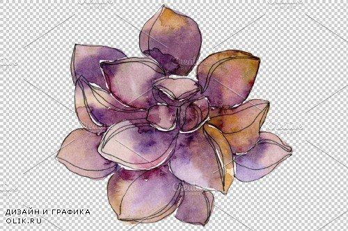 Succulents Watercolor png - 3750371