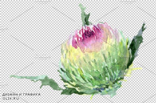 Thistle Watercolor png - 3746053