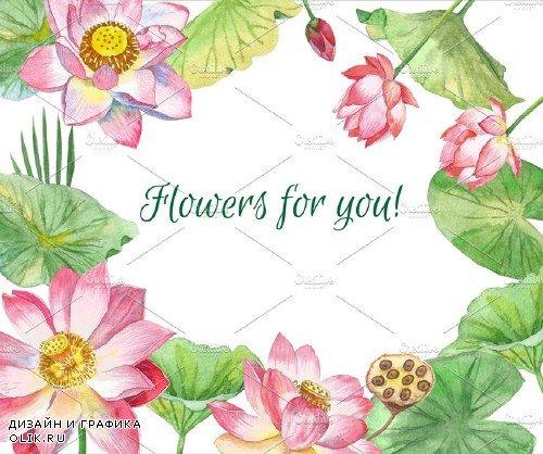 Lotus Flowers - 996576
