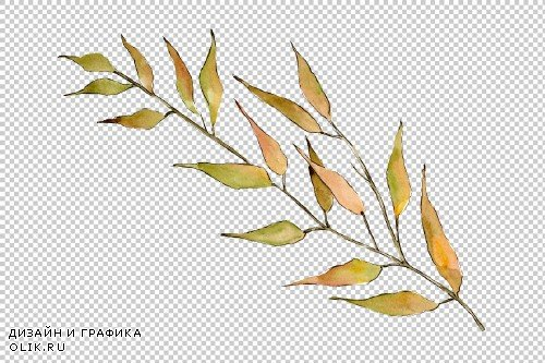 Willow branches PNG watercolor set - 3083099